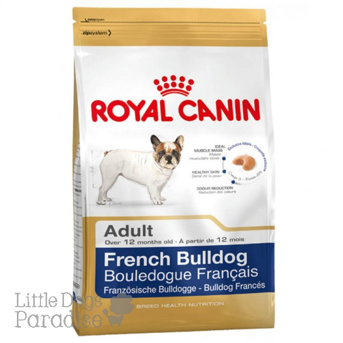 French Bulldog Adult