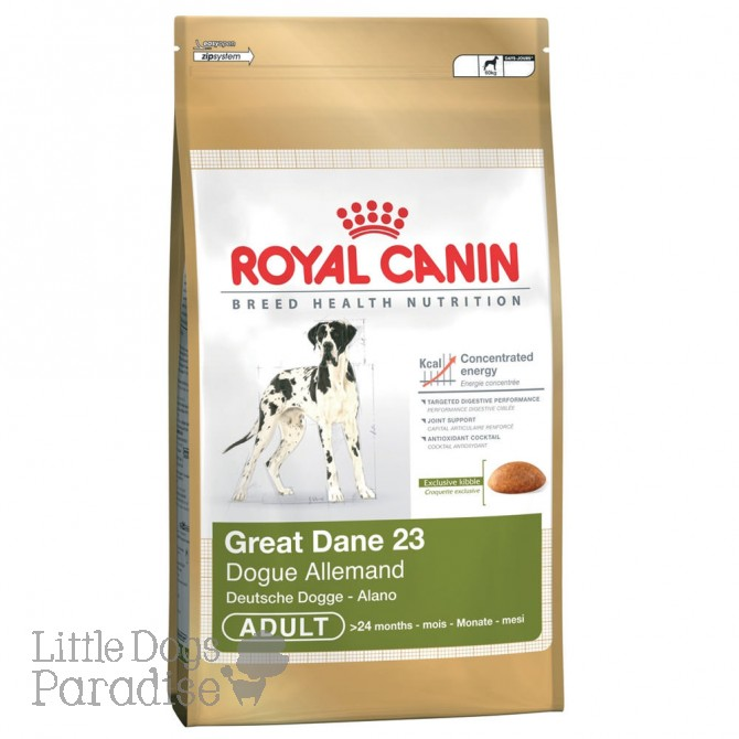 Great Dane 23 Adult