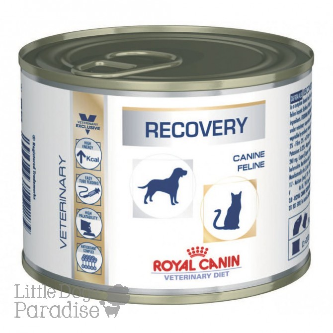 Recovery Cats/Dogs