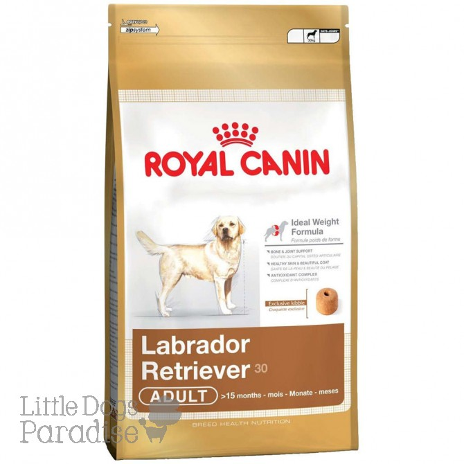Labrador Retriever 30 Adult