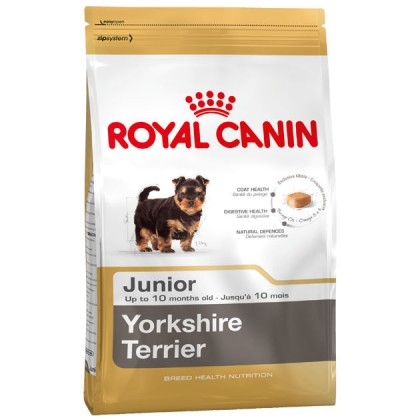 Yorkshire Terrier Junior