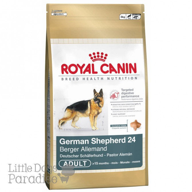 German Shepherd 24 Adult
