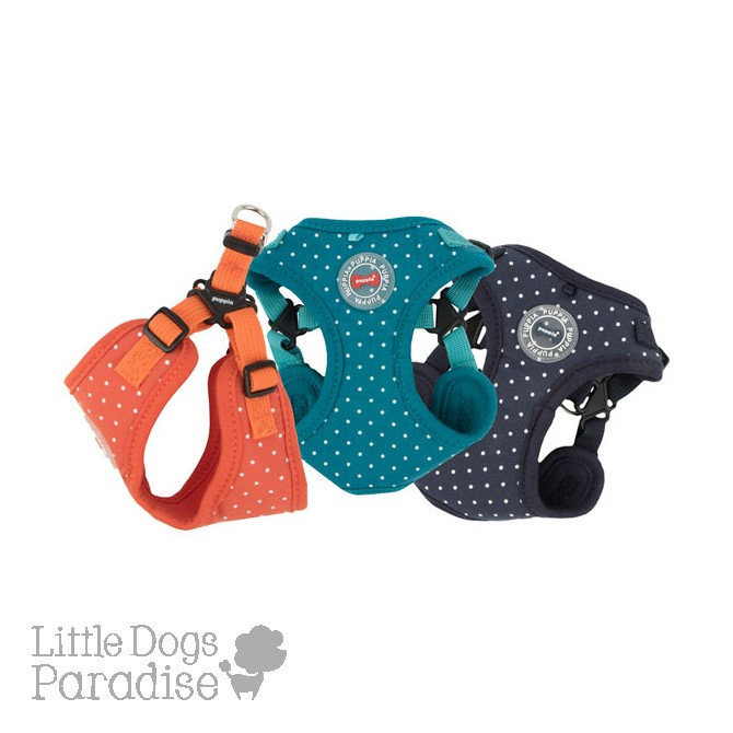 Dotty Harness-II-C